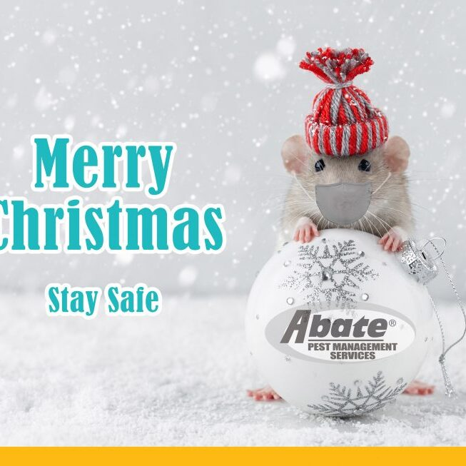 Stay-Safe-Merry-Christmas-Abate-980x653